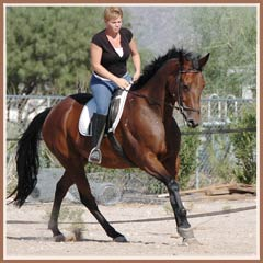 Linnea by Graditz, ridden by Aerron Smith