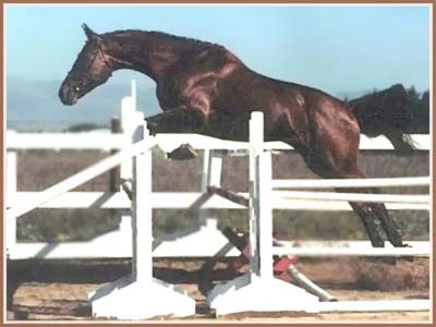 horses jumping over fences. Paramoure jumping