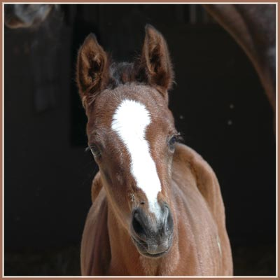 Persephone x Aul Magic ox filly at 1 day