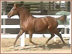 Reika, Thoroughbred mare by Golden Act