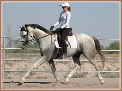 Santiago, Trakehner colt by Kostolany, June 2008, ridden by Kailee Surplus