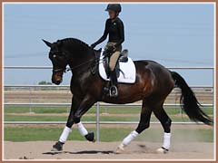 Valkyree, Trakehner mare by Kostolany, ridden by Kailee Surplus
